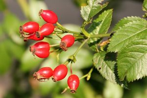 Rosehip Tablets: The Health Benefits